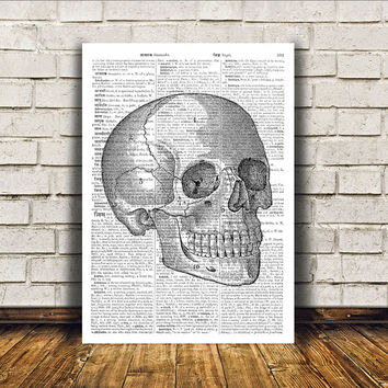 Human skull poster Anatomy art Modern decor Dictionary print RTA328