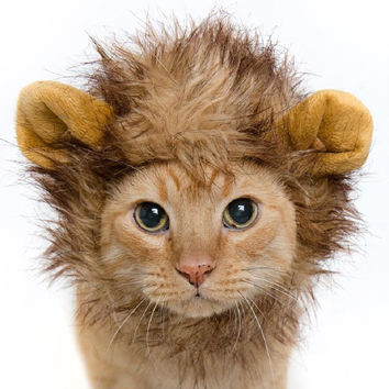 Lion Mane Cat Costume & Small Dog Costume