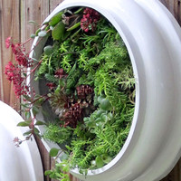 Upcycled and Elegant Round  XL Living Wall Succulent Planters