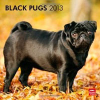 Pugs, Black 2013 Square 12X12 Wall Calendar (Multilingual Edition)
