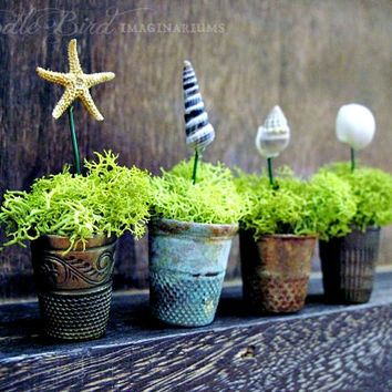 SALE Thimble Planters / Nautical Beach Decor / Miniature Air Plant Containers / Real Sea Shells & Starfish / Collectible Party Favors