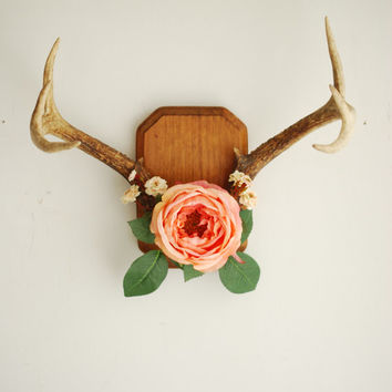 Deer Antlers On Wood Mount With Cabbage Rose Flowers And Leaves Peach Pink Green Wall