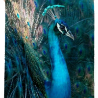 Blue Peacock Beach Towel created by ErikaKaisersot | Print All Over Me
