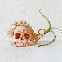 Air Plant Inhabiting Cameo Skull Sea Shell - Unique Home Terrarium - Naturalist Gardener Gifts - Ocean Inspired Planter - Live Plants