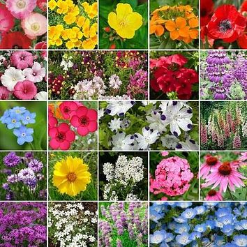 Wildflower Annual Shade Mix Seeds (7g+Seeds)