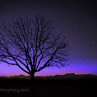 Bare Tree, Sparkly, Star Filled Nighttime Sky, Winter in the Desert, Fine Art Nature Photograph, Route 66, Home and Office Decor