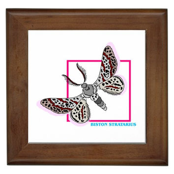 Collectors Butterfly #12 Framed Tile