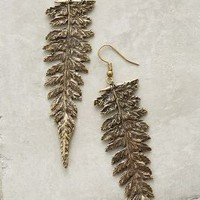 Alkemie Redwood Fern Earrings in Gold Size: One Size Earrings