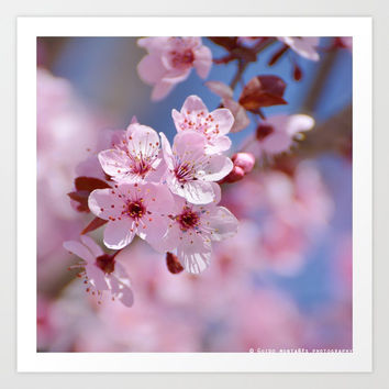 """""""Pink spring"""". Beautiful flowers... by Guido Montañés"""