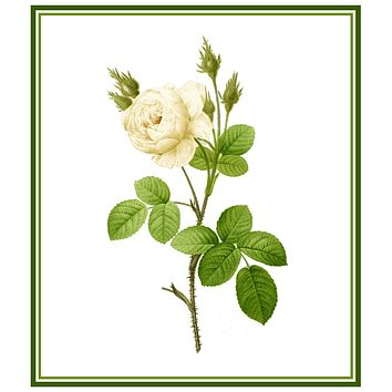 White Moss Rose Flower Inspired by Pierre-Joseph Redoute Counted Cross Stitch Pattern