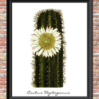 Cactus Flower Plant Art Print Botanical Natural History Vintage Illustration Desert Printable Digital Download Instant Home Wall Decor
