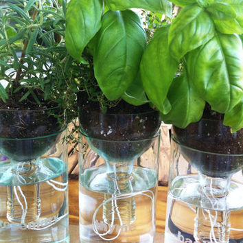 Wine Bottle Planters Self Watering  - Set Of Three (3)