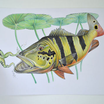 Peacock Bass Original Piece, fish art, Pencil Drawn