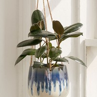 "Reactive 5"" Hanging Planter 