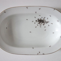bowl - chitins gloss - vintage porcelain handpainted with ants