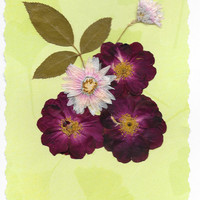Real Pressed Flower Greeting Card -Birthday Card, Note Card, Thank you Card, Reiki Charged