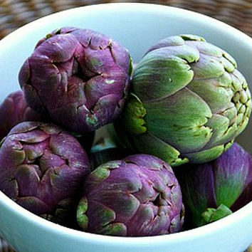 Purple Artichoke, Violet de Provence, 15 heirloom seeds, early and productive, silver foliage, cool purple blooms, cut flowers