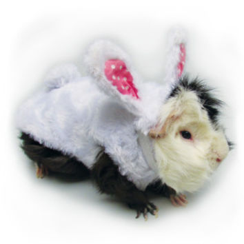 All Living Things® Bunny Rabbit Small Pet Costume