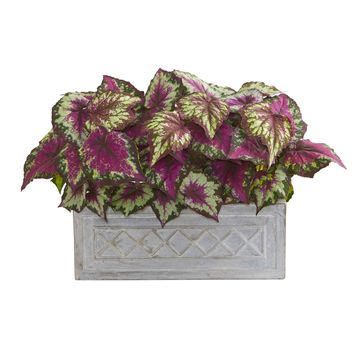 Artificial Plant -17 Inch Wax Begonia Plant in Stone Planter