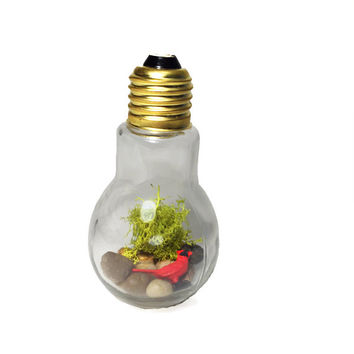 Recycled Cardinal Light bulb Terrarium