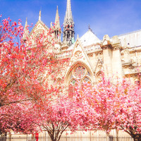 Notre Dame Paris Pink Blooms Fine Art Photography Print