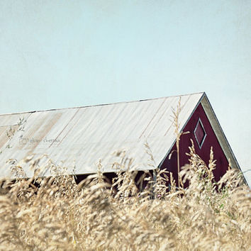Barn Photography, Rustic Wall Art, Farmhouse Decor, Country Photograph, Tin Roof  | 'Fields Of Grain'