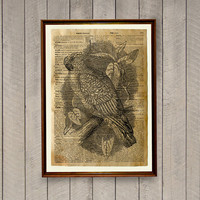 Rustic decor Parrot poster Bird print Animal art WA458