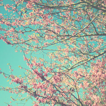 spring, teal, pink, blossoms, floral, fine art photography