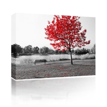 Red Tree over Park Bench