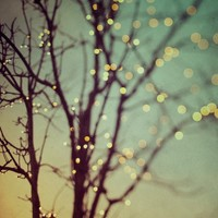 Tree photograph, Winter photography, Christmas Fairy Lights, Bare Branches, Mint Green, Yellow - Sparkle and Dance
