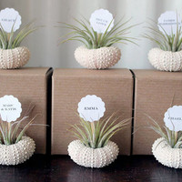 wedding place cards  // air plant party favors // qty. 50