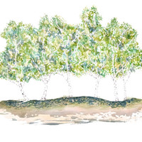 Birch Woods Print - Archival Quality Watercolor & Ink Giclee