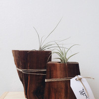 Walnut Airplant Holder