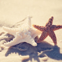 beach photography starfish decor beach cottage decor beige decor white decor fine art photography wall art BFFs 8x10