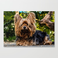 Yorkshire Terrier Canvas Print by Knm Designs