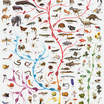 Tree of Life Amoeba to Man Evolution Poster 24x36
