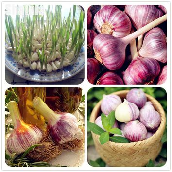 50 Pcs Giant Garlic Seeds Chinese Chive Leek Seeds Giant Onion Seeds, Spices Vegetable Garden Bonsai Plants