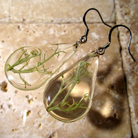 Reindeer Lichen (Cladonia sp.) Earrings, Mycology, fungi, woodland, rustic, nature, jewelry jewellery