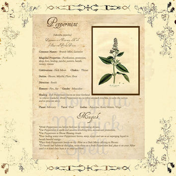 MAGICK HERB PEPPERMINT, Digital Download,  Book of Shadows Page, Grimoire, Scrapbook, Spells, White Magick, Wicca, Witchcraft, Herb Magic