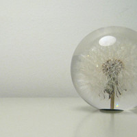 Dandelion paperweight at twentytwentyone