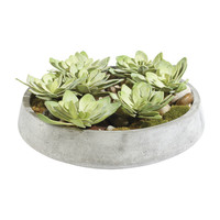 Echeveria in Bowl - Ethan Allen US