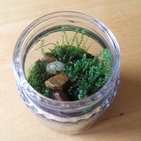 Live Woodland Moss Fresh Natural Green for Terrariums Mini Landscapes Bonsai Fairy Garden
