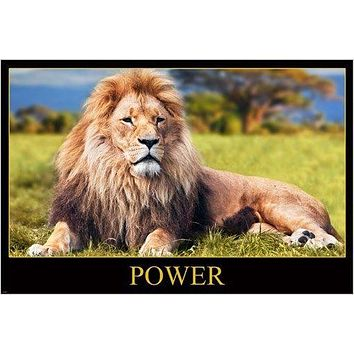 POWER POSTER featuring MAJESTIC RECLINING LION beautiful mane AFRICA 24X36