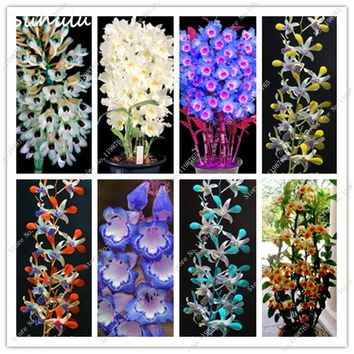 New Arrive! 80 Pcs Dendrobium Bonsai Tree Seeds Beautiful Potted Flower Seeds Rare Orchid Wedding Decor Light Up Your Garden