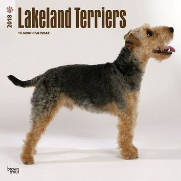 Lakeland Terriers Wall Calendar, More Dogs by BrownTrout