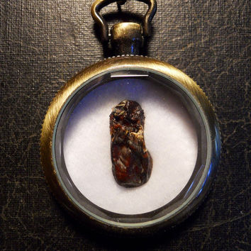 Mongoose Heart Ossuary Mummified Taxidermy Specimen Necklace