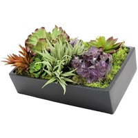 Assorted Succulents in Black Container with Amethyst