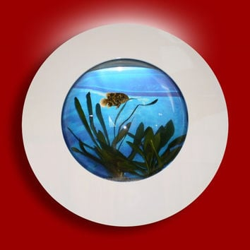 "Aussie Aquariums Wall Mounted Aquarium - Porthole White - 22"" x 22"" x 4.5"""