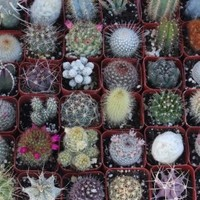 9 Gorgeous Cactus Collection
