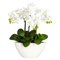 SheilaShrubs.com: Phalaenopsis Silk Flower Arrangement 4804 by Nearly Natural : Artificial Flowers & Plants